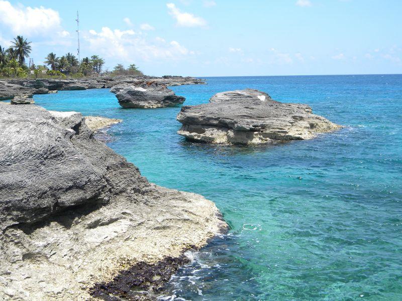 Cocodrilo. Sur de la Isla de la Juventud