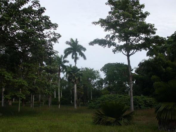 El Jardín Botánico de Cienfuegos se caracteriza por el valor histórico, patrimonial y científico
