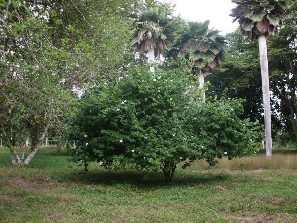 Jardín Botánico es Monumento Nacional desde 1989 y Premio Provincial y Nacional de Patrimonio