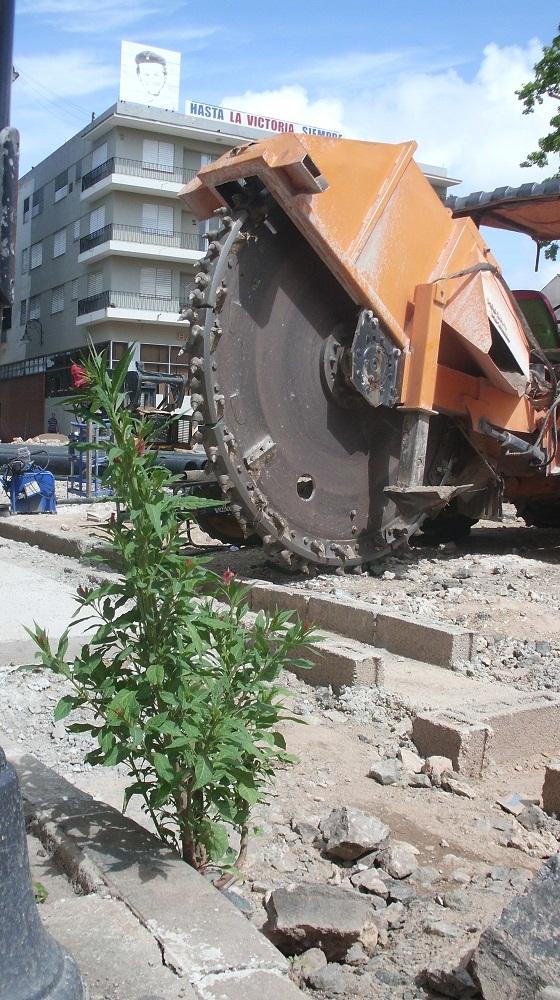 En medio de las labores de remozamiento de un área del centro Histórico de Camagüey y de instalación de una nueva red hidraulica los constructores preservan esta planta que ha crecido en las ultimas semanas entre los escombros