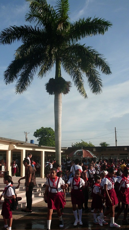 Bajo la sombra de esta palmera los alumnos esperan el inicio del curso