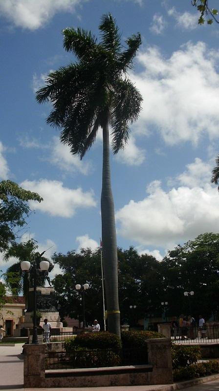 En el Parque Agramonte, una de las cuatro palmas recuerdan a igual número de patriotas, fusilados por haber participado en el primer alzamiento independentista del Camagüey (Jucaral, 4 de julio de 1851).