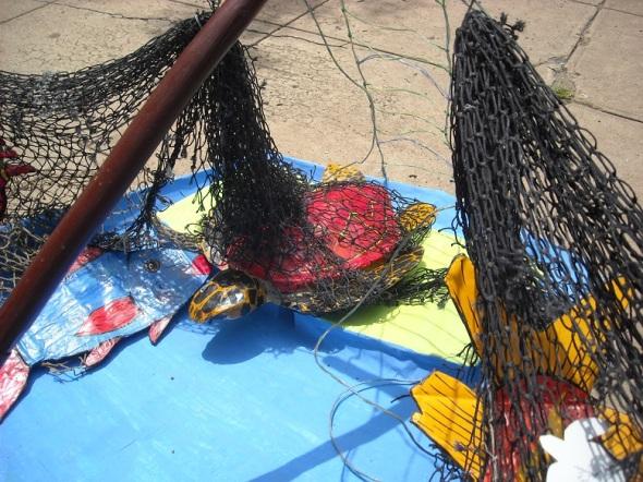 Las redes influyen en la extinción de una cantidad alarmante de especies