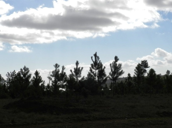 La Meseta de San Felipe se extiende a través de un valle que posee unas 30 mil hectáreas de patrimonio forestal