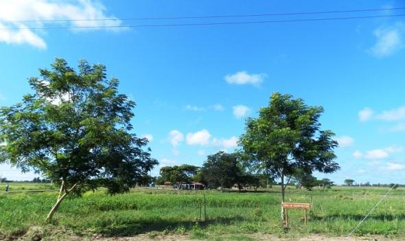Área de de Bambusetum, contará con la colección más extensa de la especie en isla, Parque Botánico Julián Acuña Galé, Camagüey, Cuba