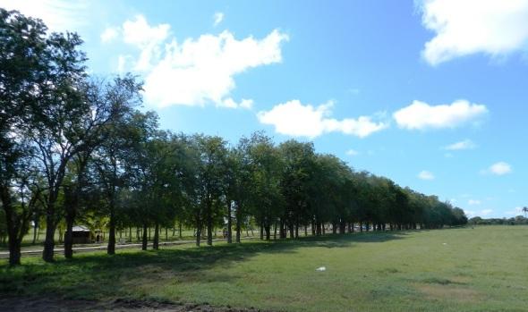 Cortina rompe viento de tamarindos en el Parque Botánico Julián Acuña Galé, Camagüey, Cuba