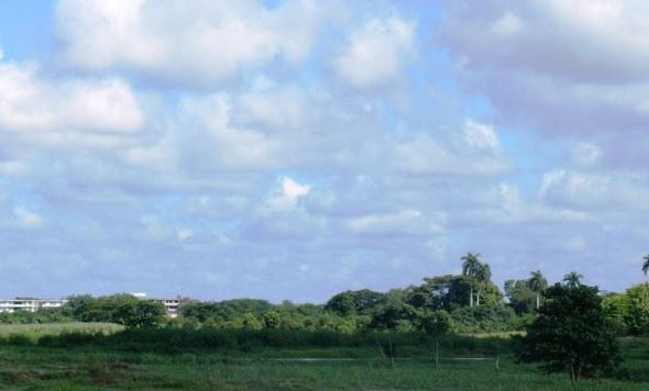 Destaca de igual forma por el bosque siempre verde, las plantas exóticas y frutales, el área Palmetum. Parque Botánico Julián Acuña Galé, Camagüey, Cuba