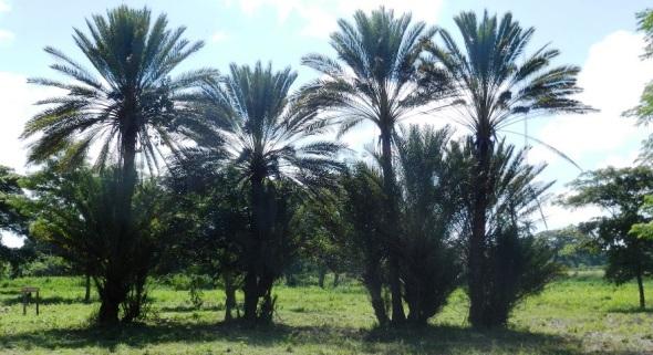 Favorece a la instalación el hecho de que la provincia de Camagüey posea la mayor cantidad de plantas endémicas en toda Cuba