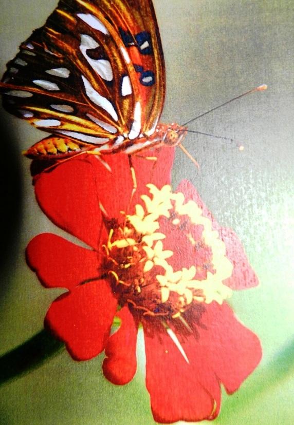 Presentan colección fotográfica de diversidad natural cubana