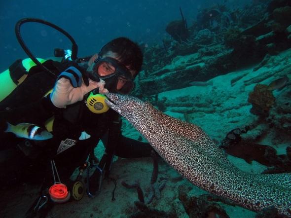Hermoso espectáculo bajo el mar
