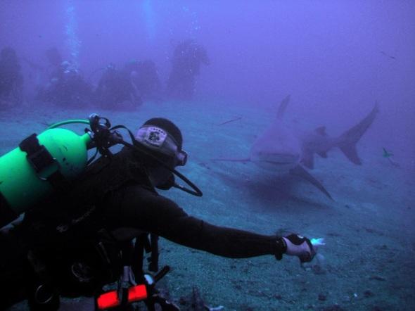 Show Especial con Tiburones una emotiva aventura bajo el mar en Cuba