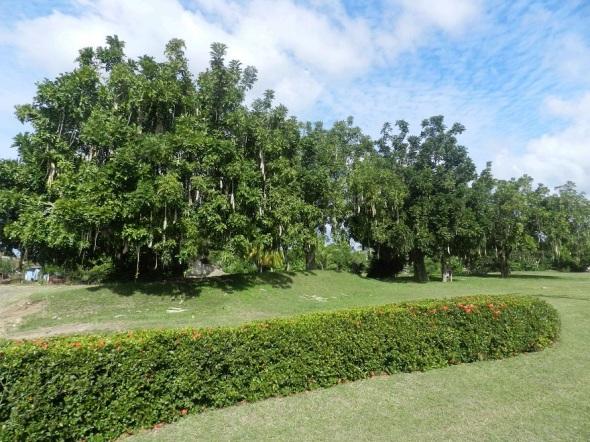Tínima y Hatibonico están protegidos por una tupida y majestuosa vegetación.
