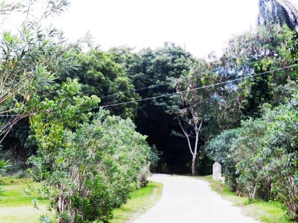 Allí, había arribado por un camino sombreado por frondosos árboles
