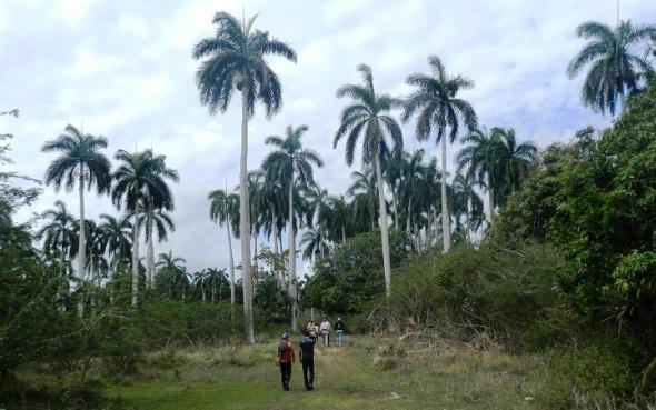 Los Palmares predi¿ominan en Los Güiros