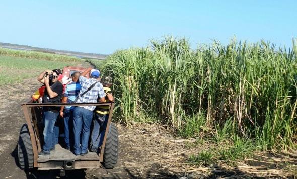 Periodistas de diversos medios visitan áreas cañeras de la UBPC Flor de Mayo