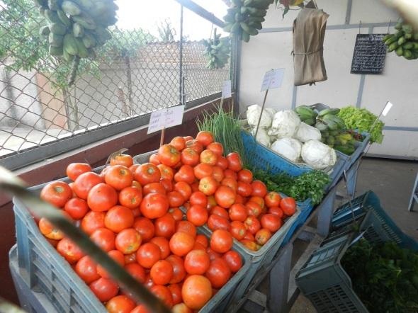 Evalúan en Camagüey comercialización de productos agropecuarios