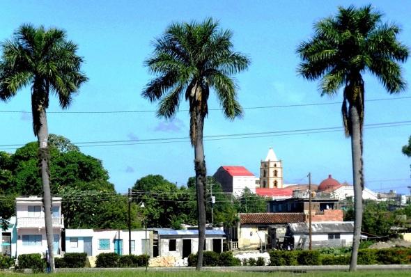 las-pameras-embellecn-el-paisaje-camagueyano