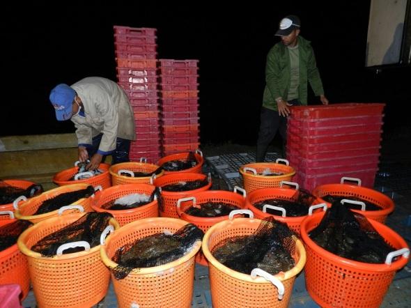 en-la-isla-existen-cinco-unidades-productoras-del-camaron-localizadas-en-sancti-spiritus-camaguey-las-tunas-granma-y-holguin-foto-lazaro-d-najarro-pujol