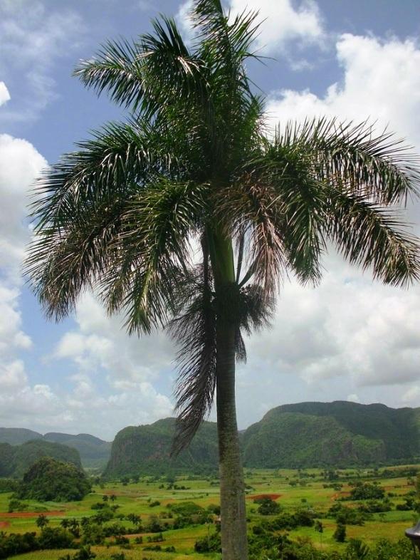 Una mirada desde Hotel Los Jasmines.Foto Lázaro David Najarro Pujol,