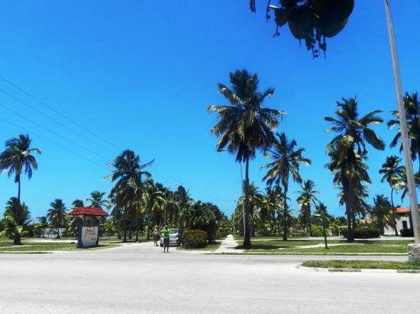 Cocoteros en la Playa Santa Lucia