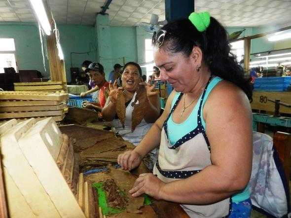 La mujer es decisiva en Fábrica de tabaco El Surco, de Camagüey. Foto Lázaro David Najarro Pujol.