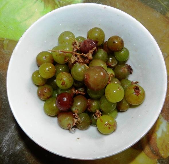 Ernestico le gustaba la uva. Foto Lázaro D. Najarro Pujol