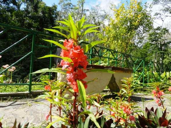 Disimiles especies de la flora de Topes de Collantes