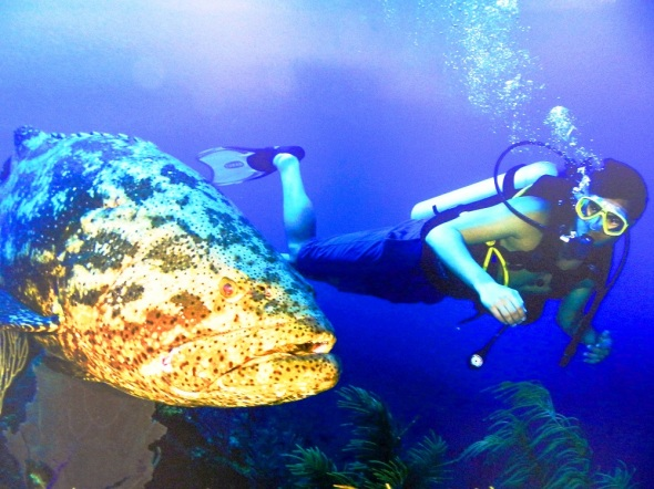 Hombre y universo subacuático de los Jardines de la Reina