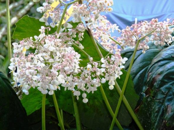 Las flores embellecen la región