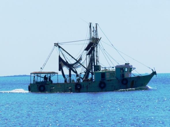 Universo marino camagüeyano