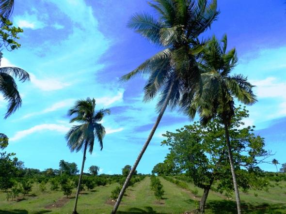 Bello paisaje de Birán