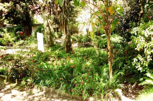 Distintas especies de plantas  ornamentales en la Quinta Bolivar