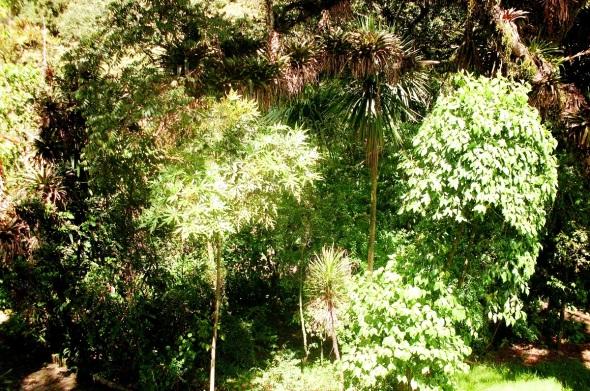 Tupida vegetación en la Quinta