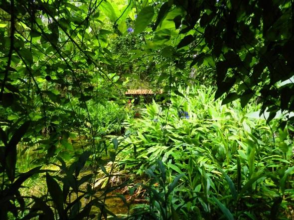 Parque Codina, rodeado de un bosque de gran diversidad