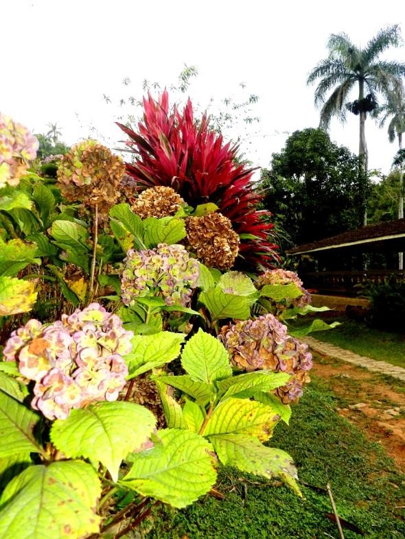 Una flora fascinante