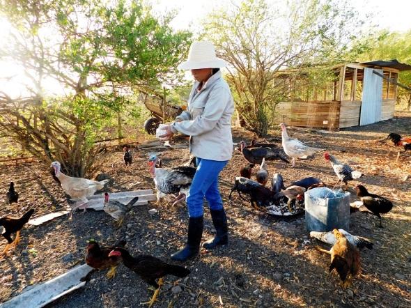 La provincia de Camagüey, cuenta con la finca agroecológica y forestal La Liliana